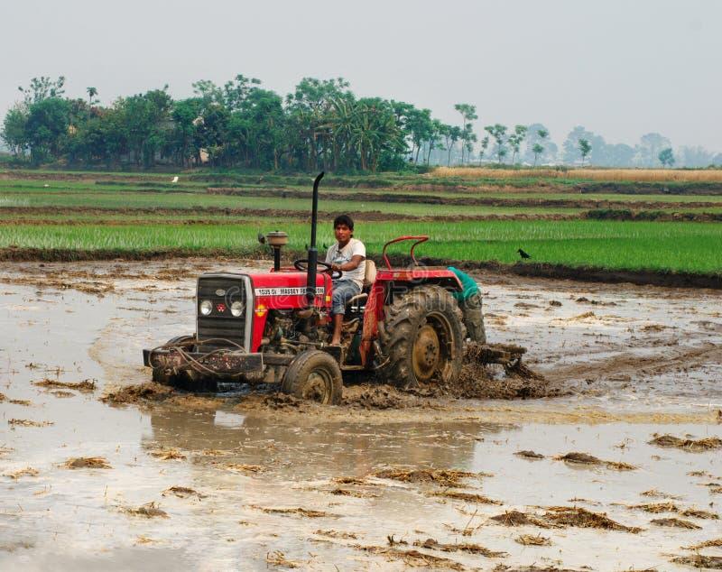 Trator que ara um campo do arroz em Chitvan, Nepal imagem de stock
