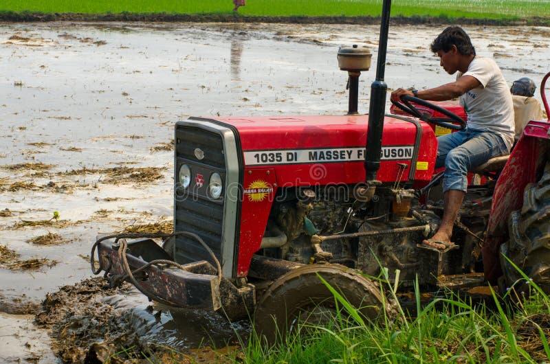 Trator que ara um campo do arroz em Chitvan, Nepal fotos de stock