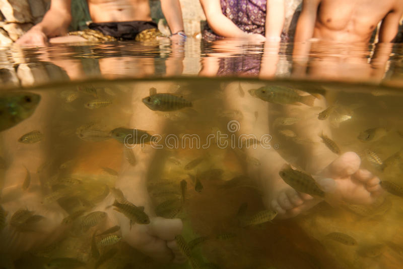 Trattamento Di Cura Di Pelle Di Pedicure Dei Piedi Della Stazione Termale Dei Pesci Immagine Stock Libera da Diritti