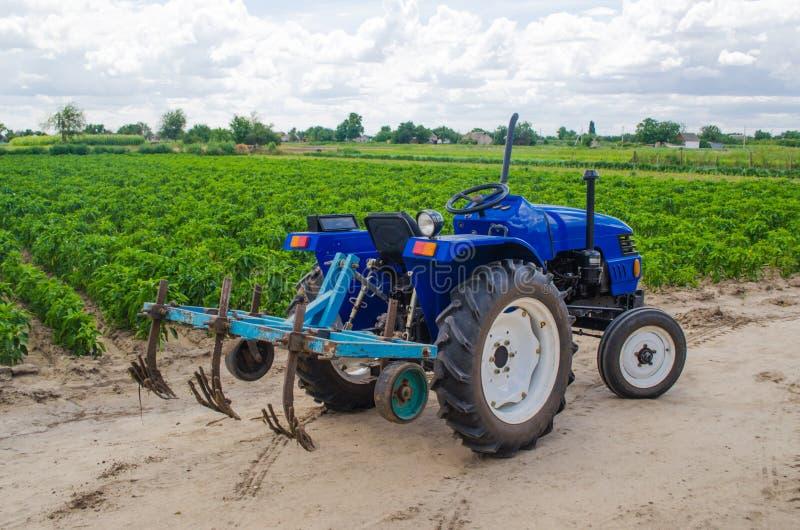 Trattore blu con un aratro del coltivatore ed il campo verde della piantagione bulgara del pepe sui precedenti Agricoltura, agric fotografia stock libera da diritti