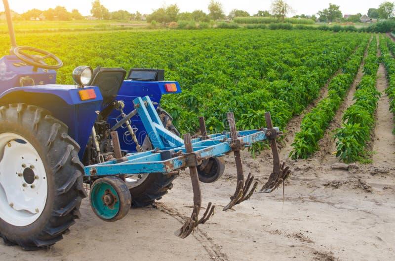 Trattore blu con un aratro del coltivatore sui precedenti del campo verde della piantagione bulgara del pepe Agricoltura ed agric fotografia stock libera da diritti