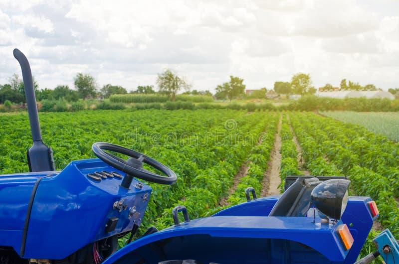 Trattore blu sui precedenti del campo verde della piantagione bulgara del pepe Agricoltura ed agricoltura agricolo fotografie stock