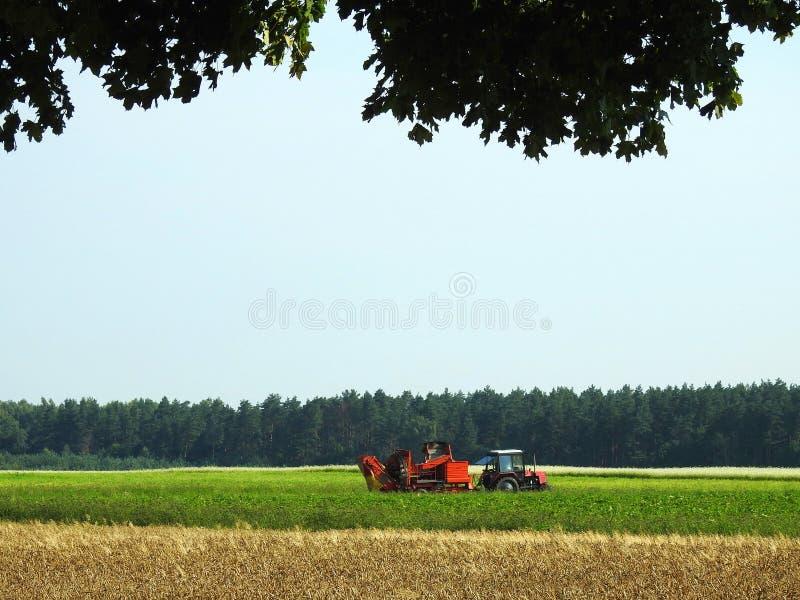 Trattore che funziona nel giacimento della patata, Lituania fotografie stock