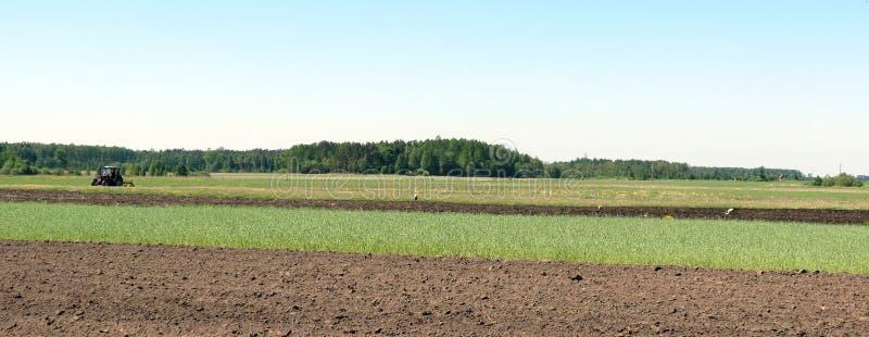 Trattore che funziona nel giacimento di primavera, Lituania fotografia stock libera da diritti