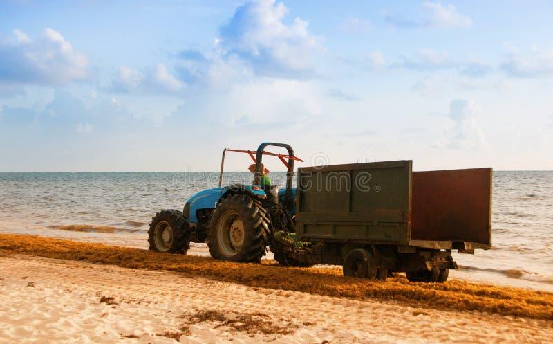 Trattore che libera la spiaggia dall'alga Costa dell'Atlantico della Repubblica dominicana fotografia stock libera da diritti