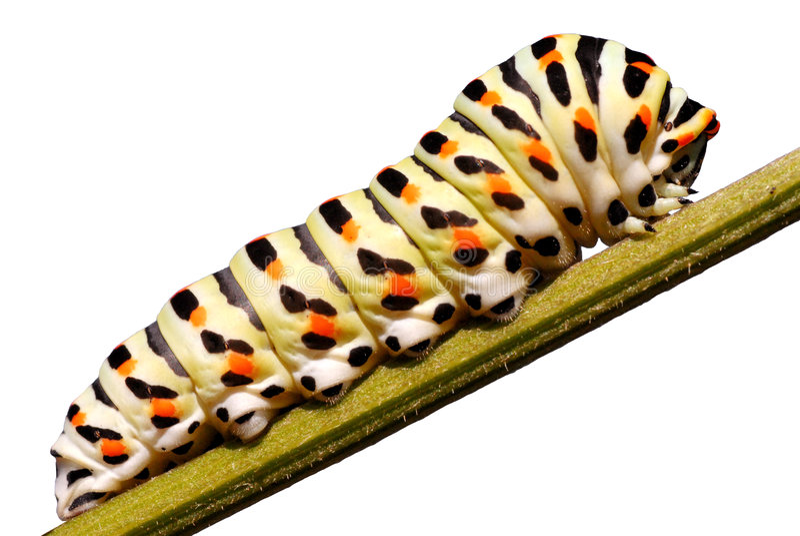 Trattore a cingoli isolato di swallowtail fotografia stock libera da diritti