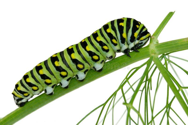 Trattore a cingoli isolato di Swallowtail immagine stock libera da diritti
