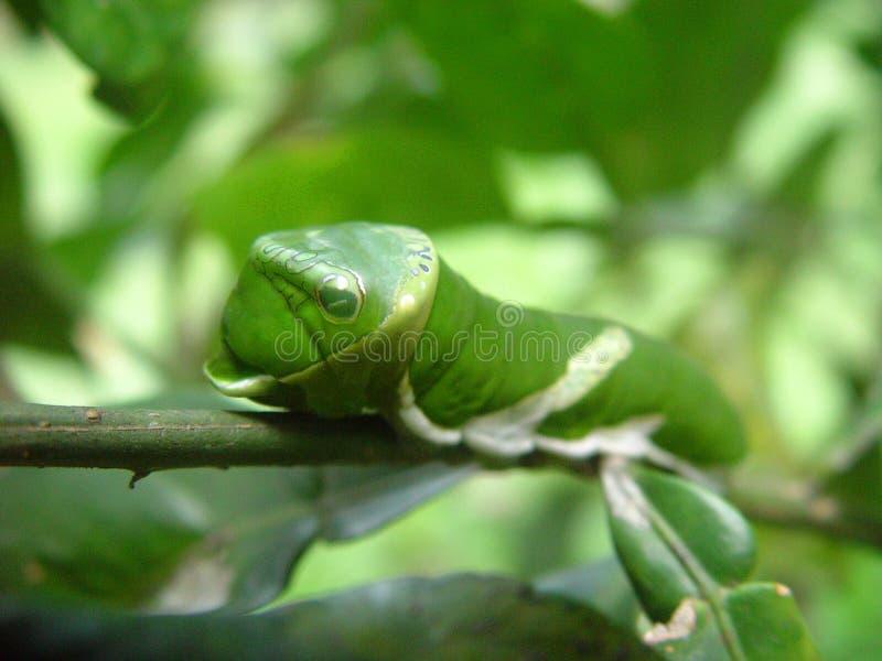 Trattore a cingoli verde fotografie stock