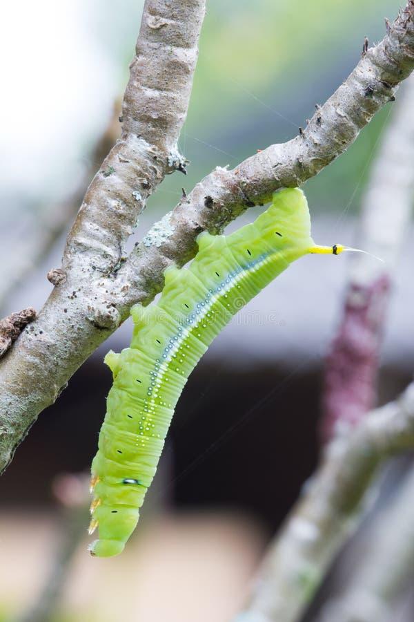 Trattore a cingoli verde su un ramo di albero fotografia stock libera da diritti