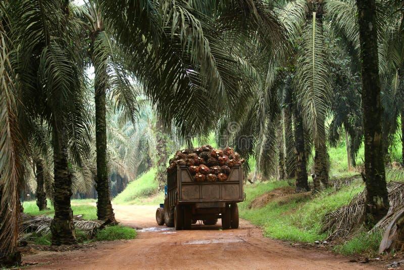 Trattore nella piantagione della palma da olio - serie 4 immagini stock libere da diritti