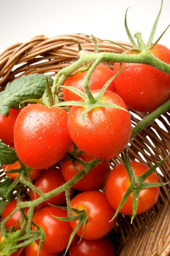 Traube der Tomate lizenzfreie stockfotos