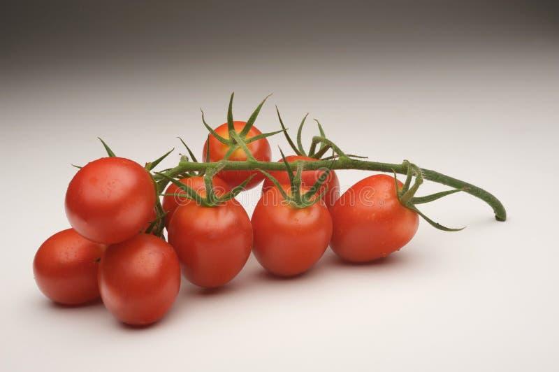 Traube der Tomate stockfoto