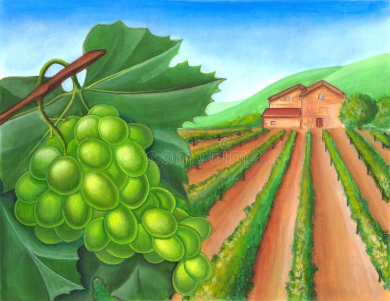 Traube und landwirtschaftliche Landschaft lizenzfreie abbildung