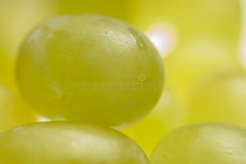 Trauben stockbild