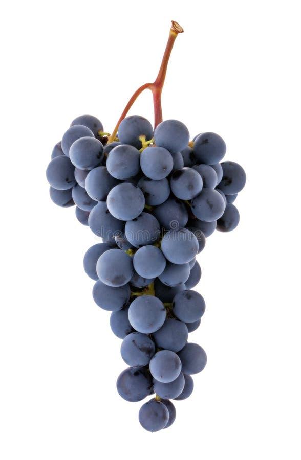 Trauben b?ndeln lokalisiert auf wei?em Hintergrund Reife blaue Weinrebebeere auf Stamm als Detail für Verpackungsgestaltung stockfotos