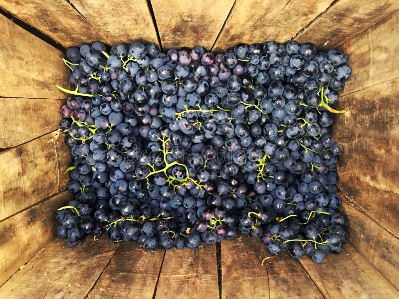 Trauben, nachdem geerntet werden, Trauben in einem Holzetui stockfotos