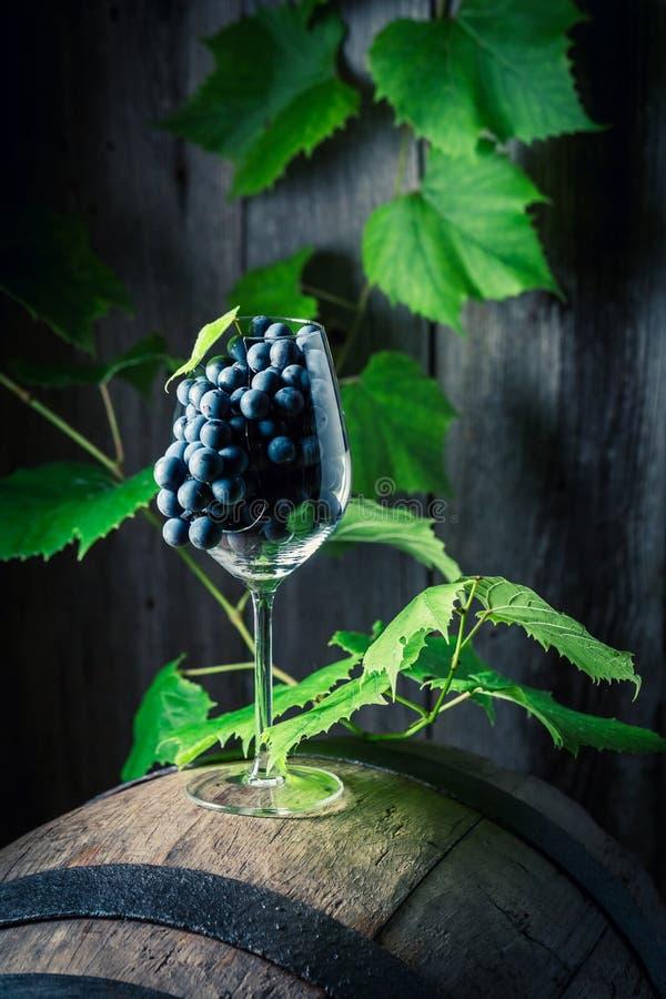 Trauben und Reben des Weins auf Eiche rasen stockfotografie