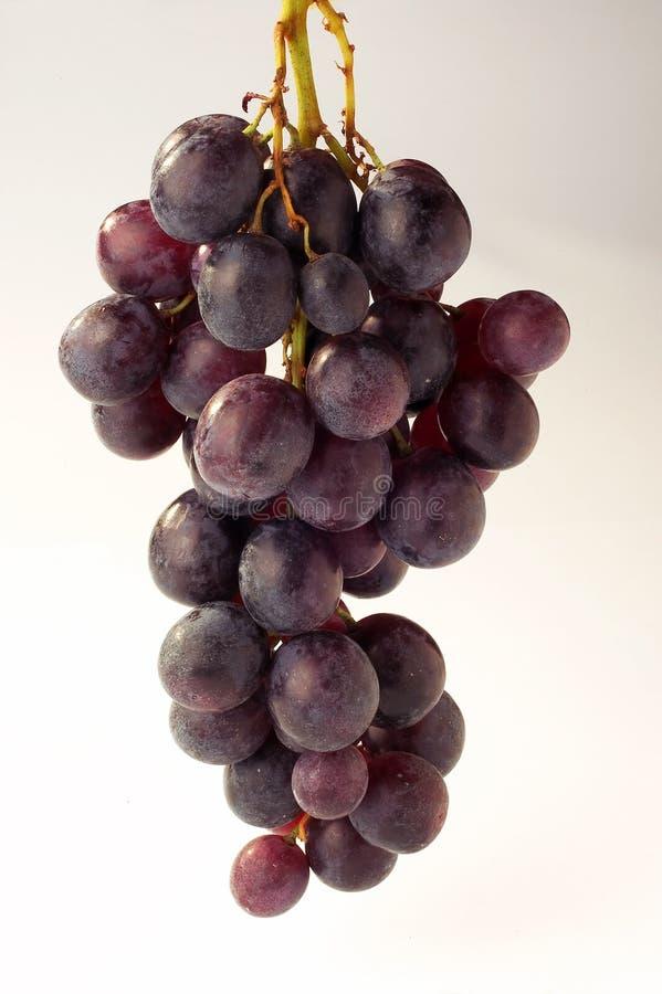 Trauben - Weintrauben lizenzfreie stockfotografie