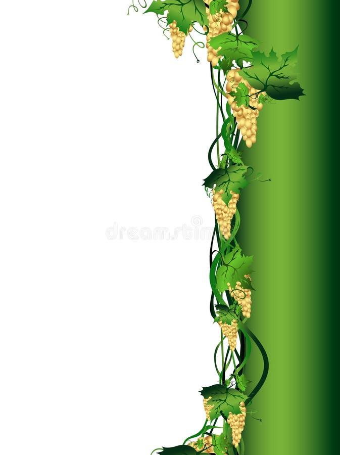 Traubenrebe stock abbildung