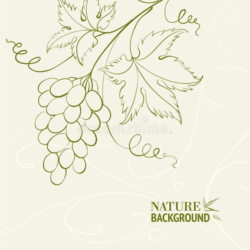 Traubenweinkarte. vektor abbildung