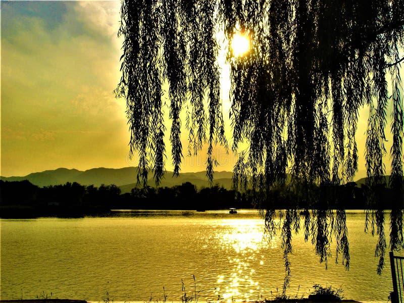 Trauerweide, Lumineszenz, Verschwinden, See, Licht und Märchenatmosphäre lizenzfreies stockbild