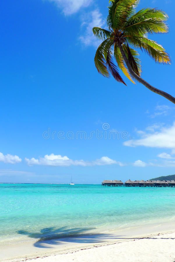 Download Traumstrand Moorea stock image. Image of polynesia, overwater - 20471555