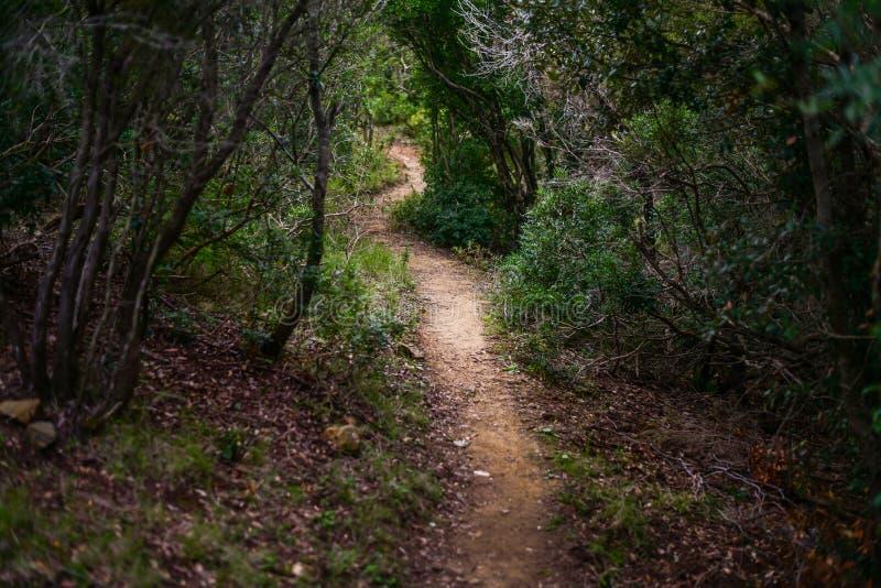 Traumwanderweg im mediterranen Busch stockfoto