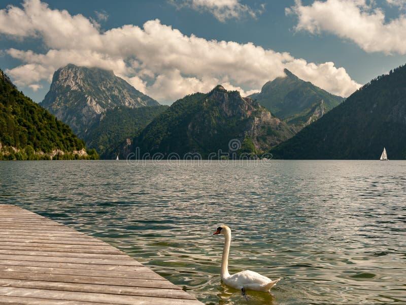 Traunsee Austria jeziorne łabędzie góry i chmury w lecie obrazy royalty free