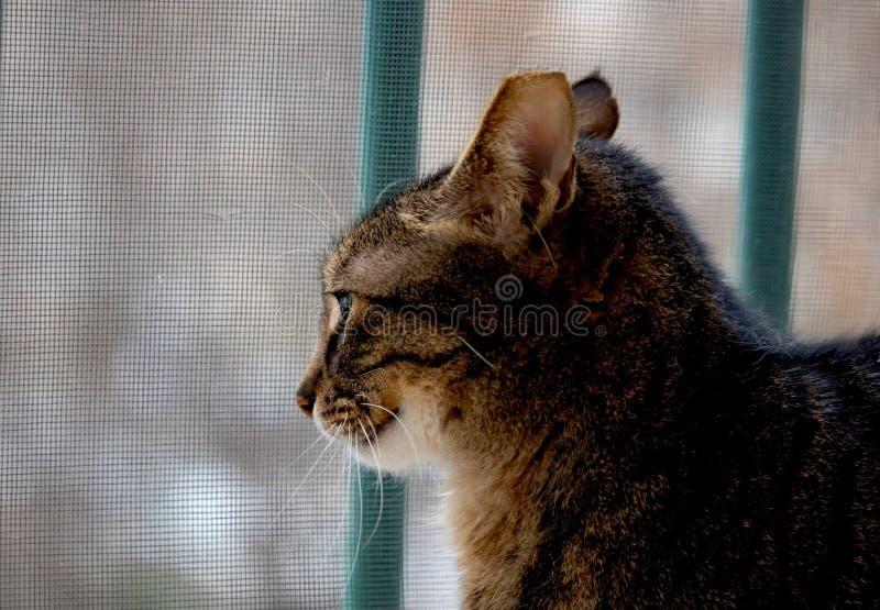 Traurige einsame Katze wartet stockfotografie