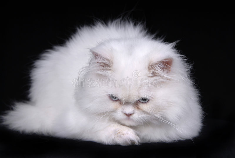 Traurige Katze lizenzfreies stockfoto