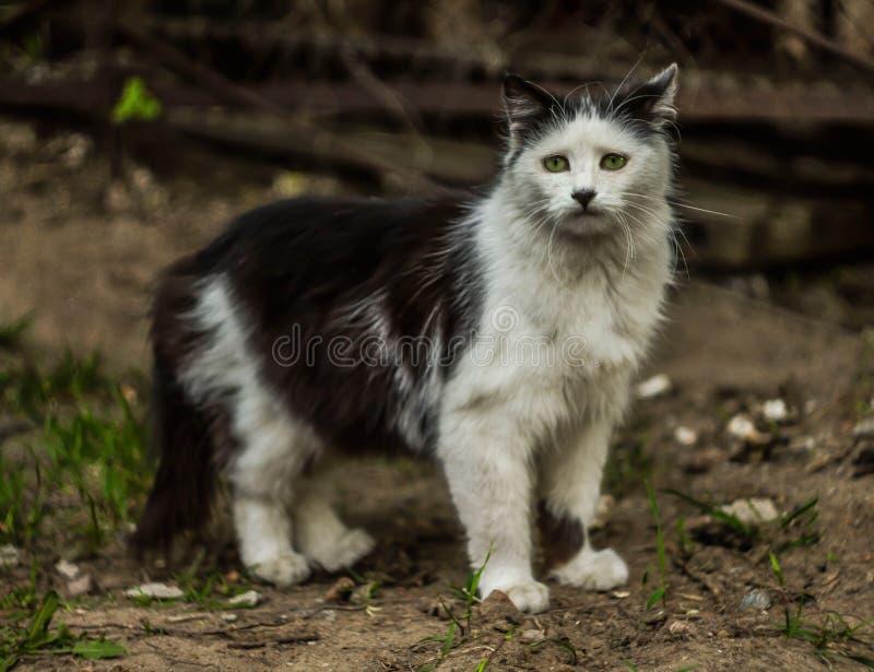 Traurige Katze stockbilder