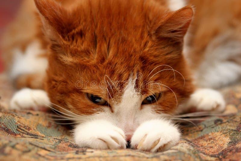 Traurige Katze lizenzfreies stockbild