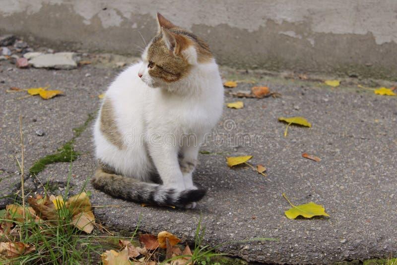 Traurige Streukatze Nette Cat On The Road lizenzfreies stockbild