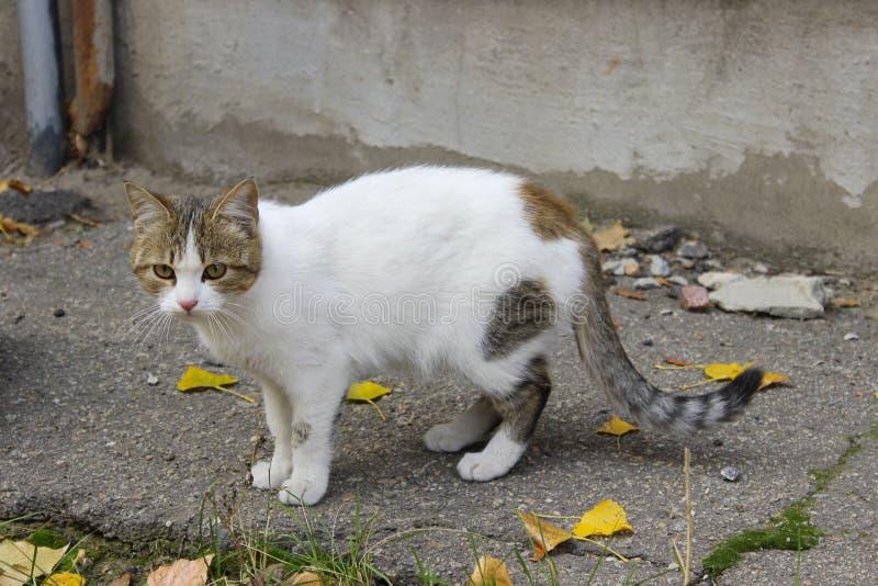 Traurige Streukatze Nette Cat On The Road lizenzfreie stockfotografie