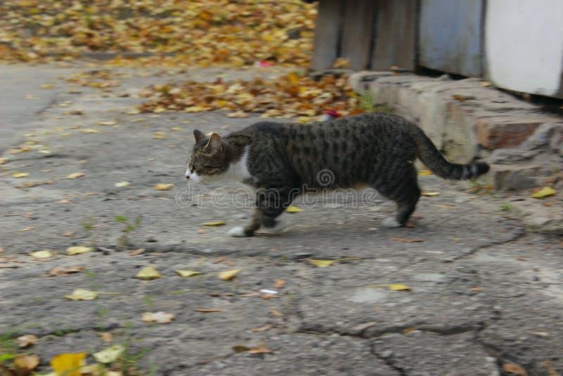Traurige Streukatze Nette Cat On The Road lizenzfreies stockfoto
