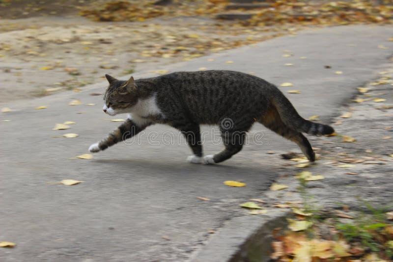 Traurige Streukatze Nette Cat On The Road lizenzfreie stockfotos