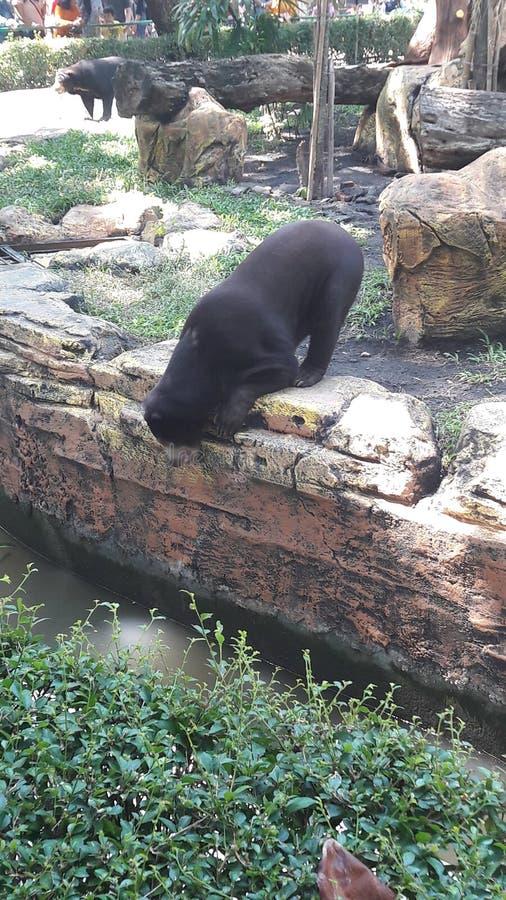 Trauriger Bär so dünn stockbilder