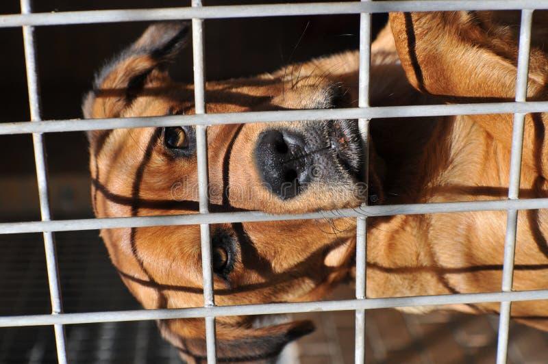 Trauriger heimatloser Hund stockfoto