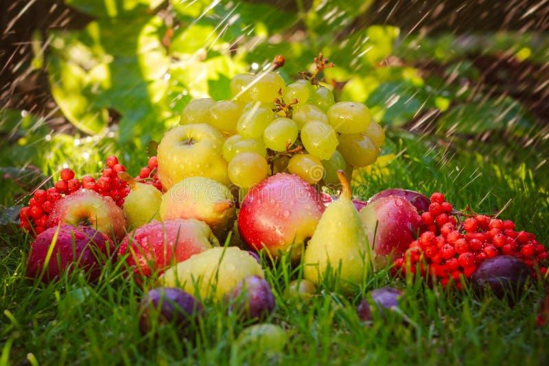 Trauriger Herbst trägt Grassonnenschein Früchte lizenzfreie stockbilder