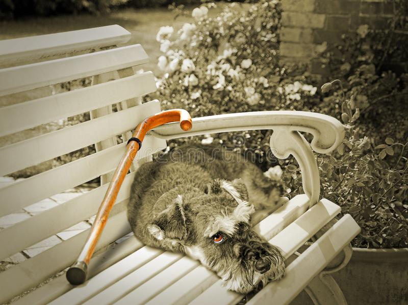 Trauriger Hund, der seinen Eigentümer verfehlt lizenzfreies stockfoto