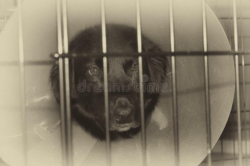 Trauriger Hund im Käfig mit Kegel auf Kopf lizenzfreie stockfotos