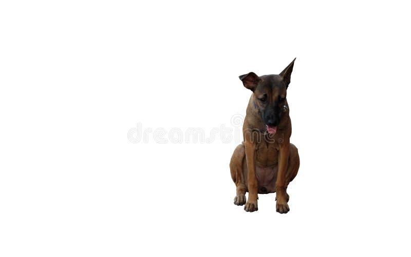 Trauriger Hundemischzucht in einem Kragen mit einer Glocke Getrennt Wei?er Hintergrund stockbilder