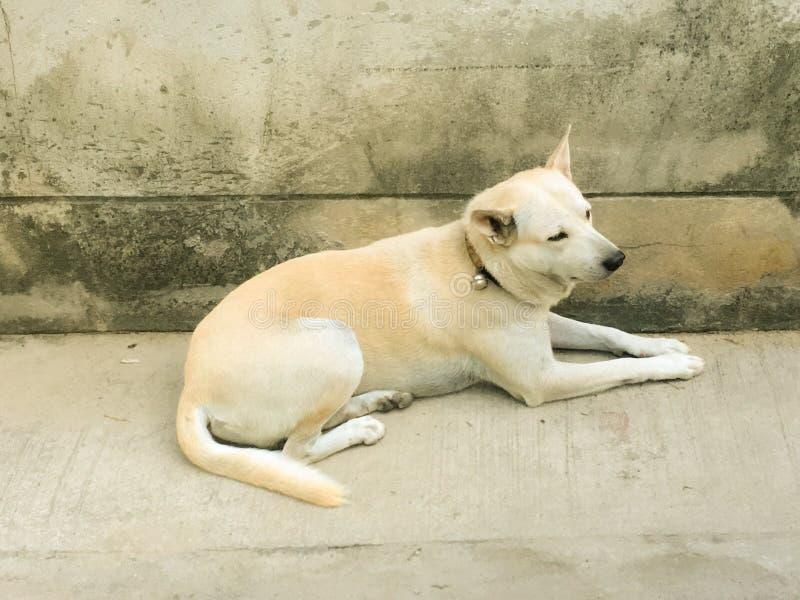 Trauriger und einsamer Hund auf dem Boden, ein sehr trauriger Welpe stockfotos