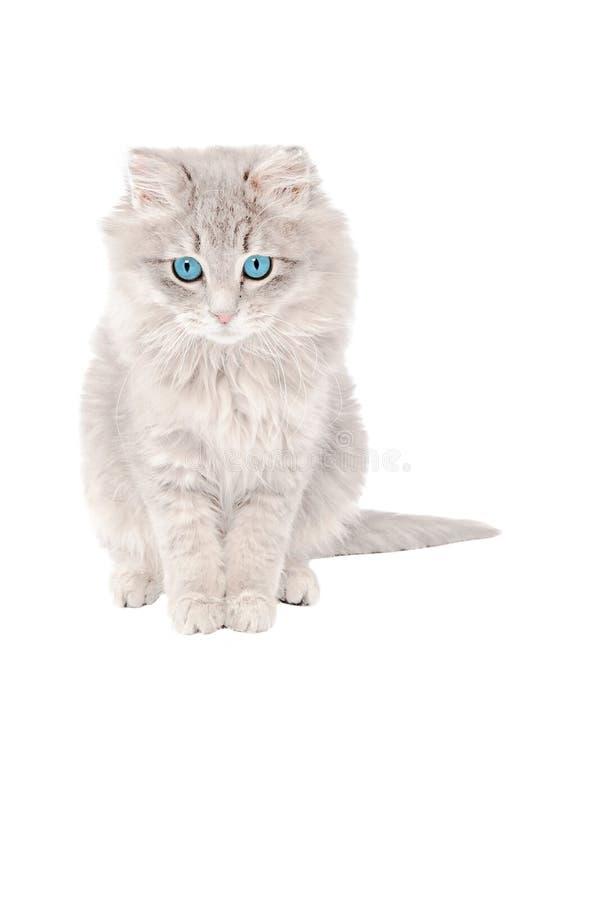 Trauriges graues Kätzchen stockbilder