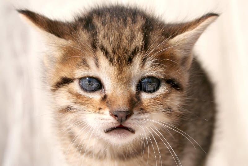 Trauriges Kätzchen lizenzfreies stockfoto