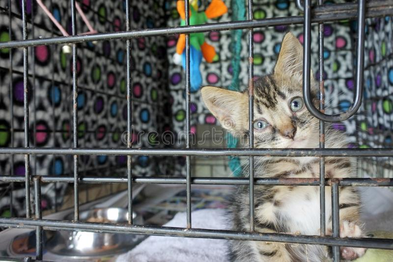 Trauriges Kätzchen in einem Käfig im Tierheim, das auf einen neuen Eigentümer wartet stockbild