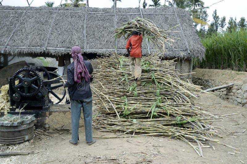 Trava för Jaggeryförberedelse av sockerröret och utdragning av fruktsaft royaltyfria foton