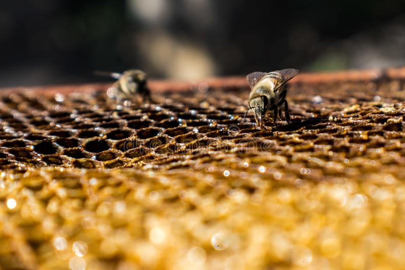 Travail d'abeilles photos libres de droits