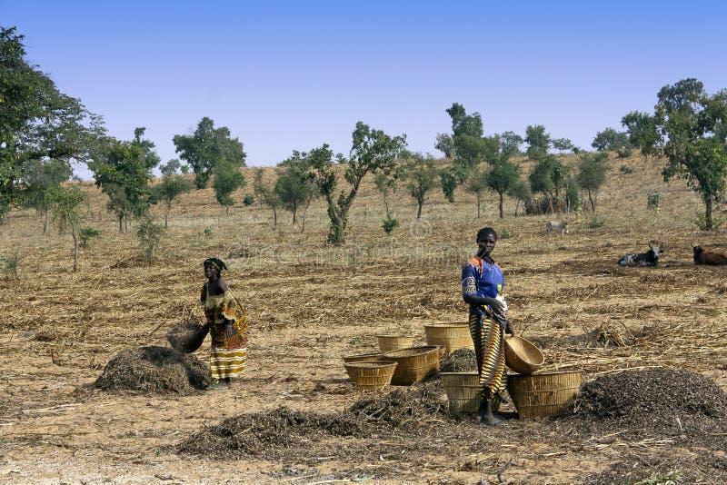 Travail dans les domaines - Mali images libres de droits