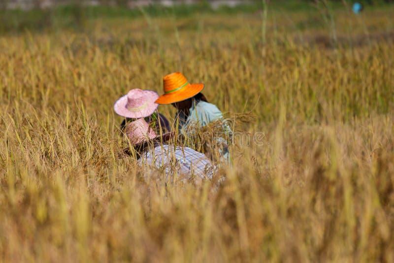 Travail thaïlandais d'agriculteurs photos stock
